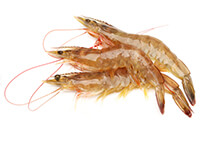 Shrimp Growth Promoter Manufacturers Andhra